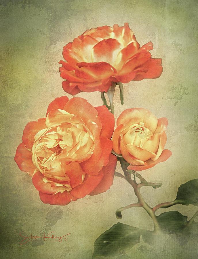 Vintage Flora by Steve Kelley