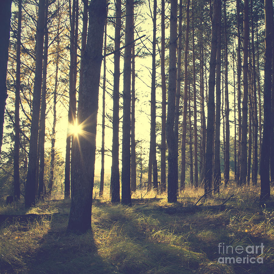 Untouched Photograph - Vintage Forest Background by Nature Photos