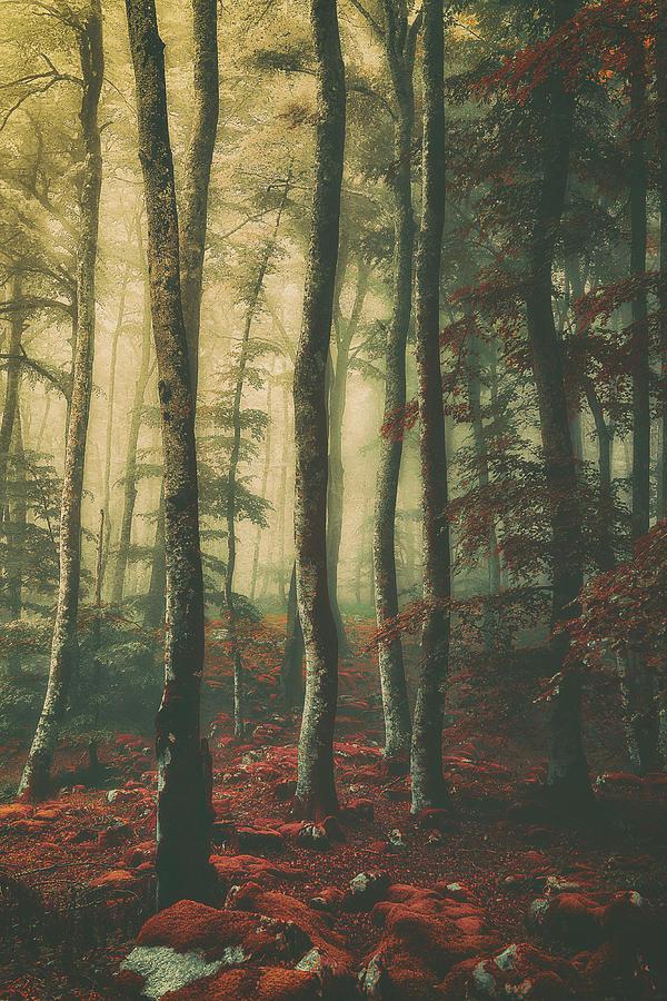 Vintage forest by Mikel Martinez de Osaba