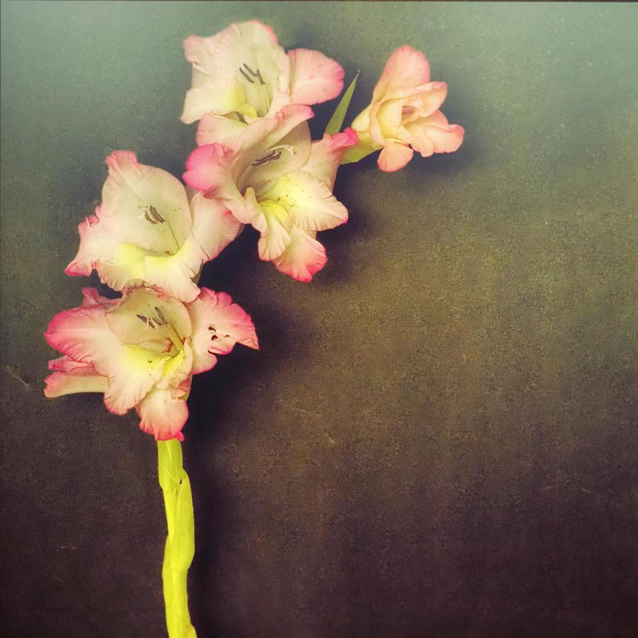 Vintage Gladiolus left side by Denise Beverly