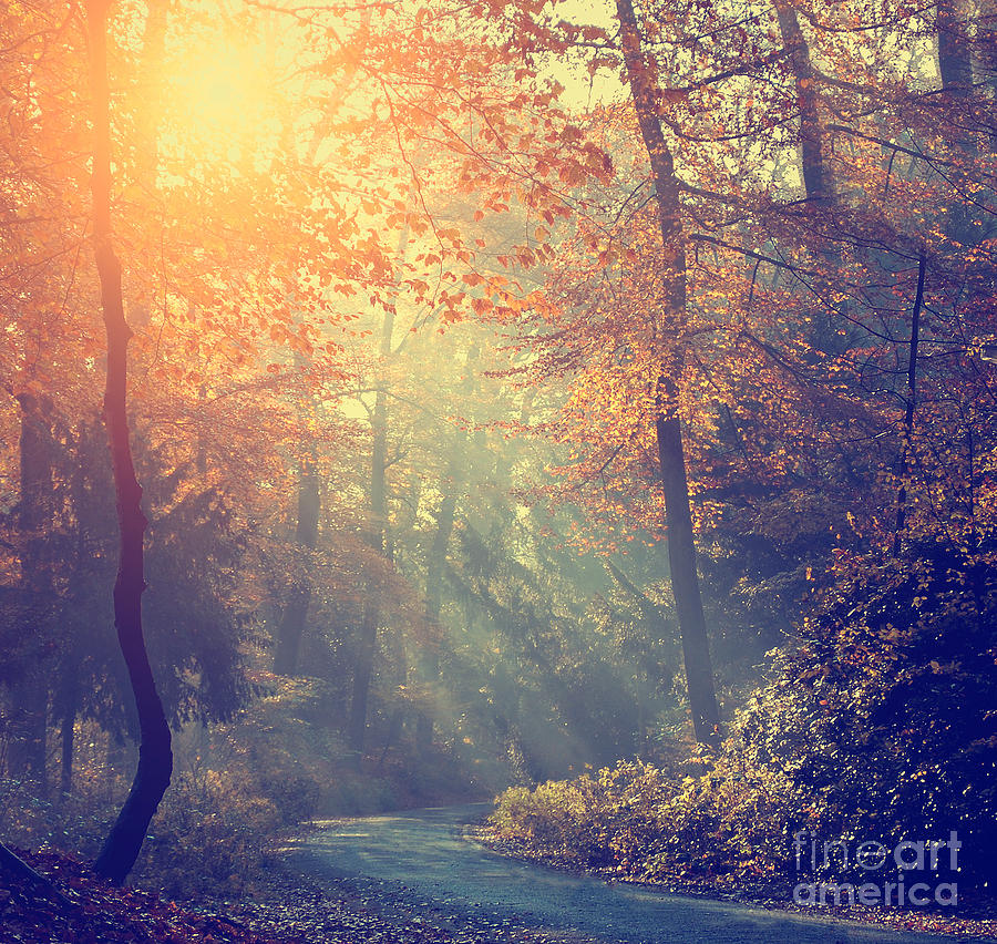 Symbol Photograph - Vintage Photo Of Autumn Forest by Dark Moon Pictures