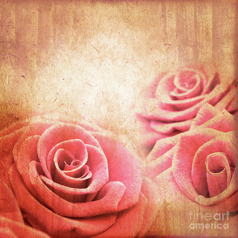 Rose Photograph - Vintage Roses by Delphimages Photo Creations