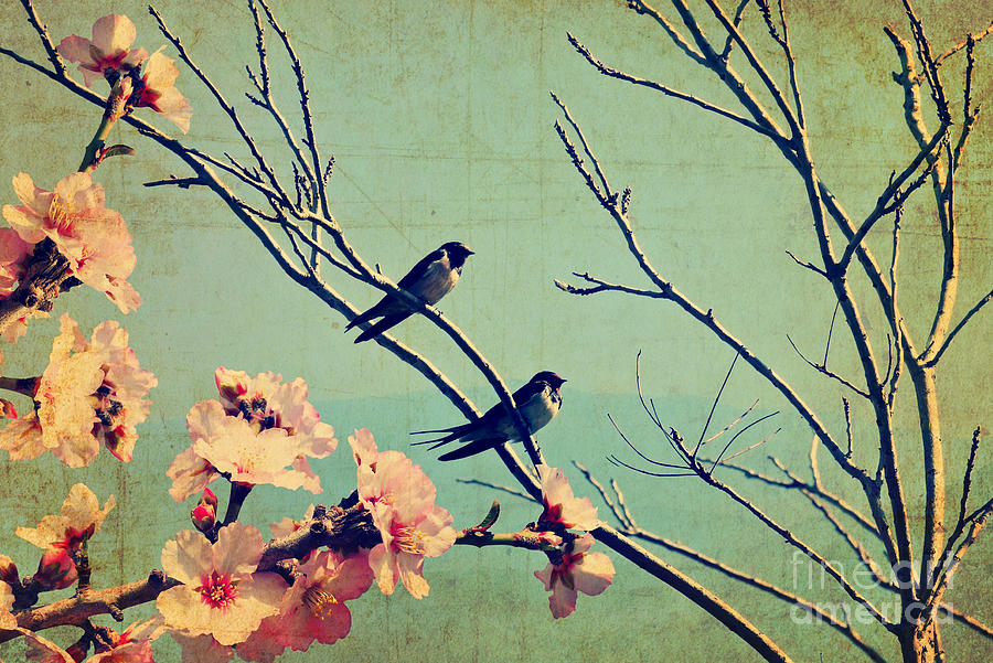 Collage Photograph - Vintage Spring Image With Swallows by Protasov An