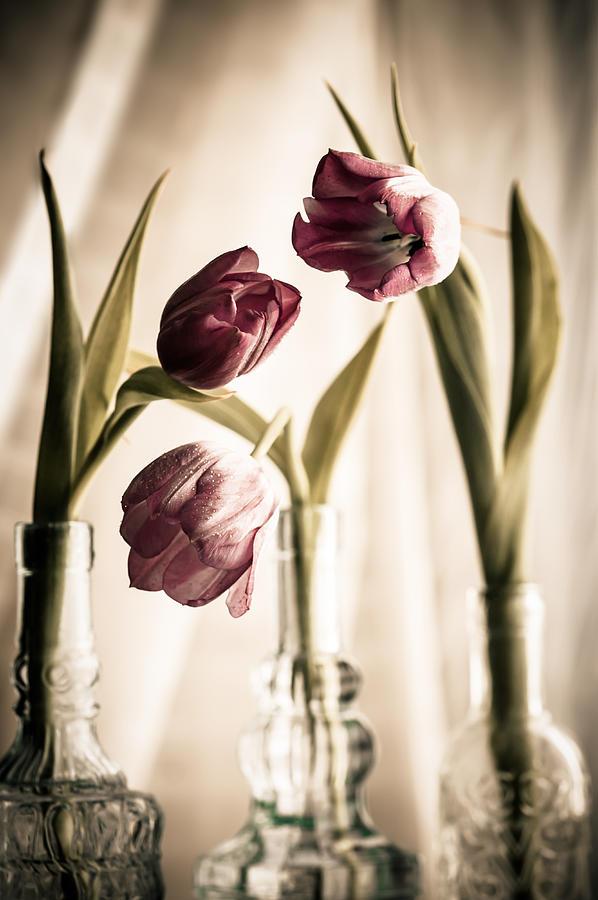 Vintage Tulips  by Maggie Terlecki