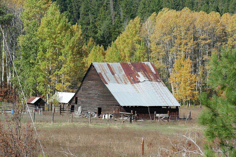 Vintage wooden barn with autumn poplars by Steve Estvanik