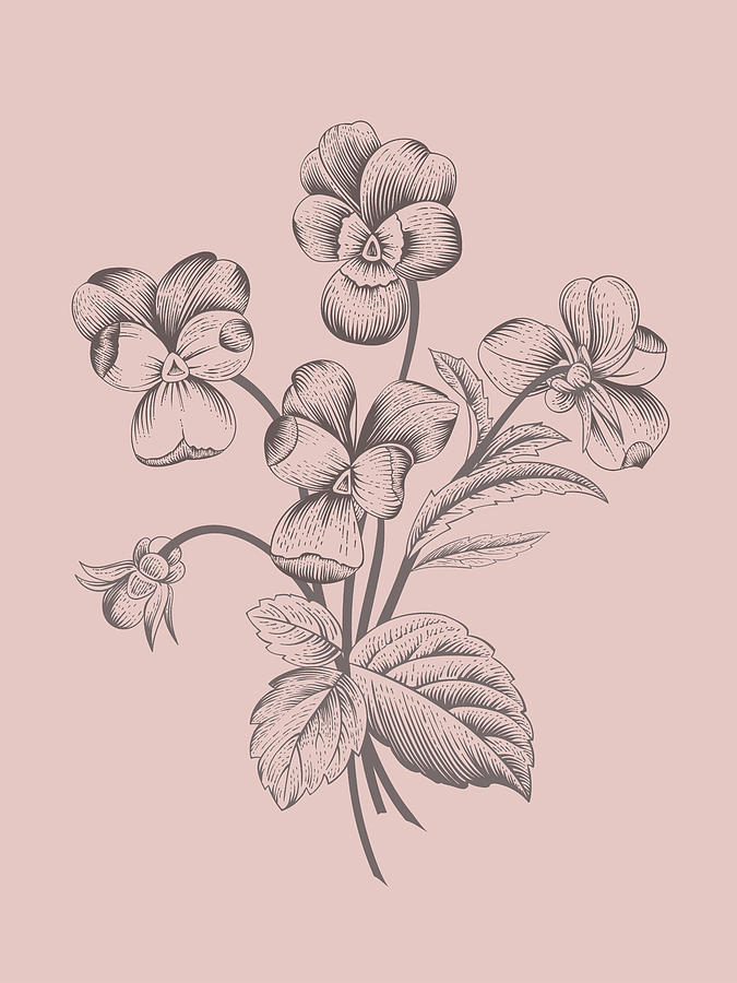 Violet Mixed Media - Violet Blush Pink Flower by Naxart Studio