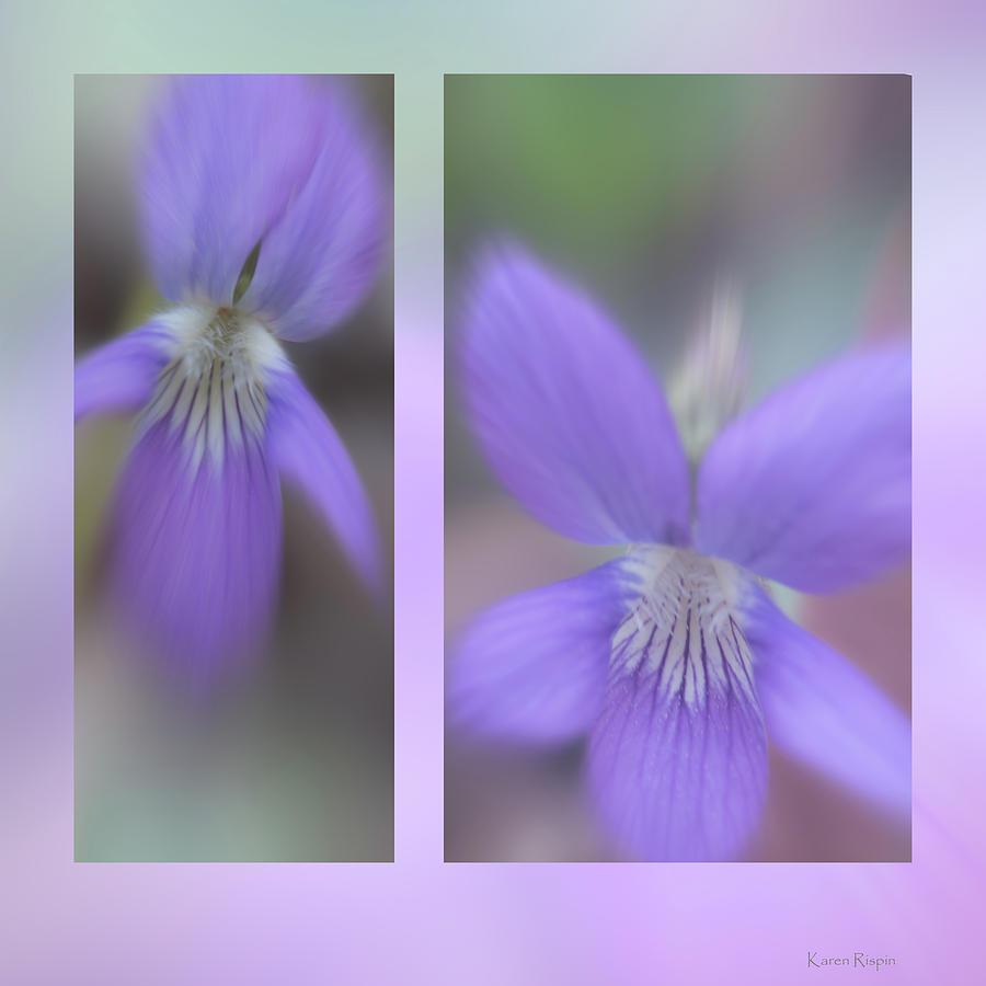 Violet by Karen Rispin