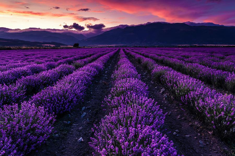 Violet Sky by Evgeni Dinev