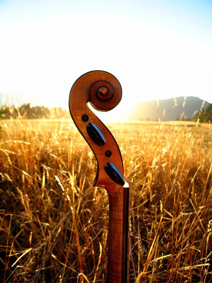 Violin Photograph by Juanestey