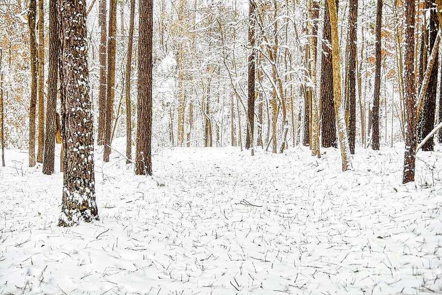 Snow Photograph - Virgin Snow by James Foshee