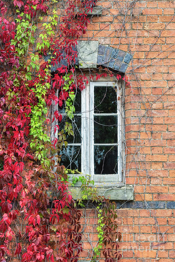 Virginia Creeper by Tim Gainey