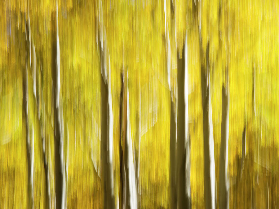 Visions of Autumn Color by Sue Cullumber