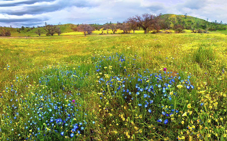 Visions of the Superbloom Along Shell Creek Road by Lynn Bauer