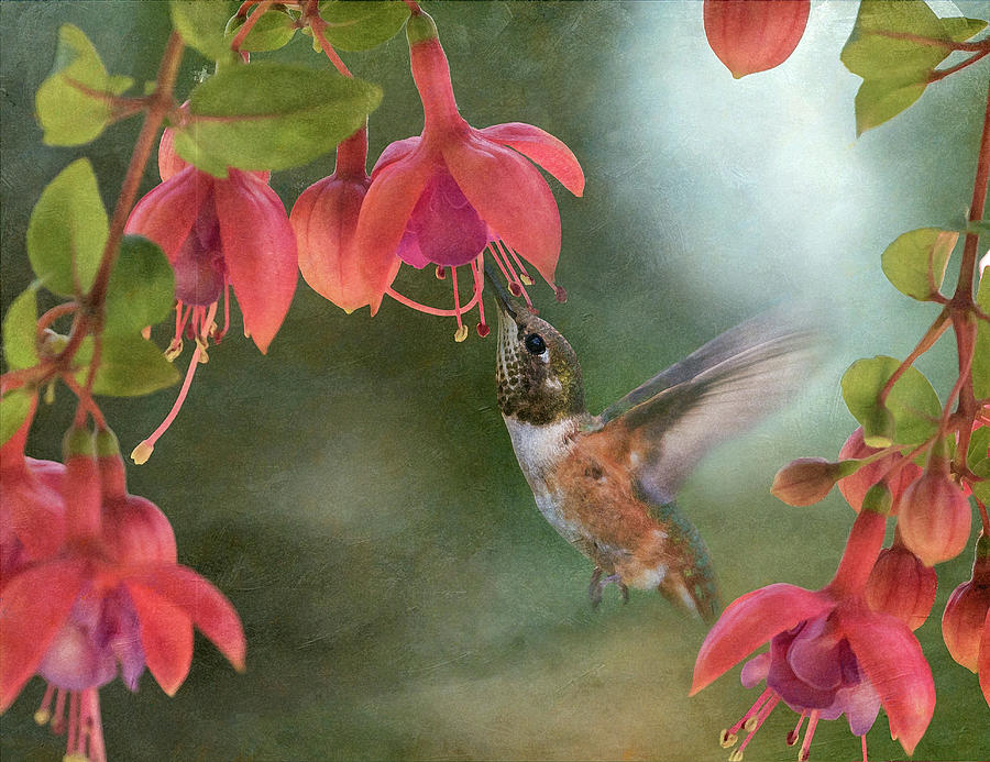 Visitor in the Fuchsia by Angie Vogel