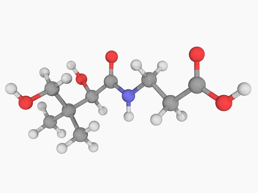Vitamin B5 Pantothenic Acid Molecule Digital Art by Laguna Design