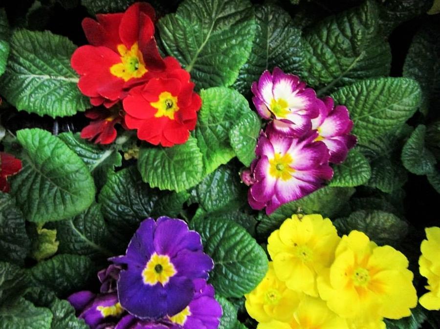 Viva spring by Rosita Larsson