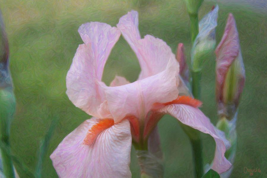 Vivid Beauty - Flower Art by Omaste Witkowski by Omaste Witkowski