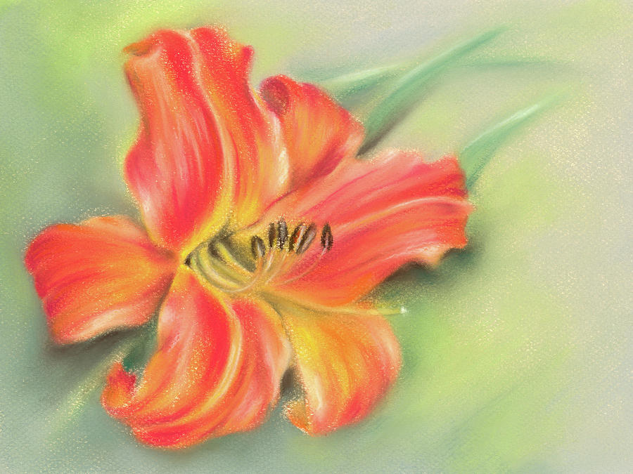 Vivid Orange Daylily by MM Anderson
