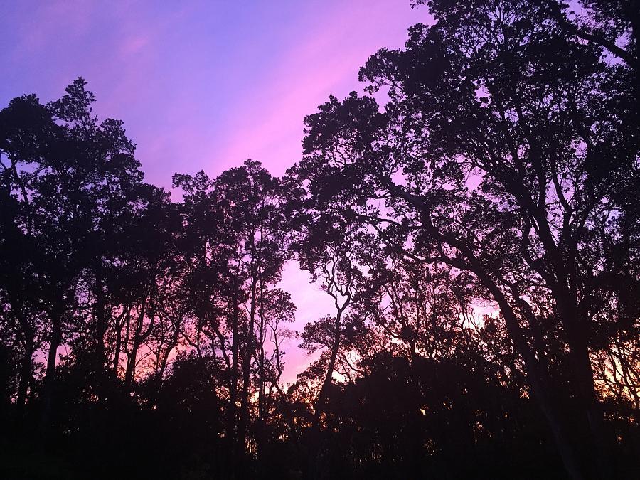 Beautiful amethyst skies above Volcano Ohia rainforest  by Lehua Pekelo-Stearns
