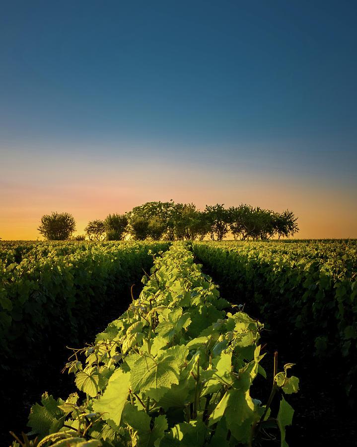 France Photograph - Vouvray Vineyard by Joseph Smith