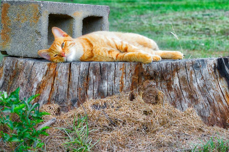 Orange Cat Photograph - Waffles Stumped by William Hafermalz