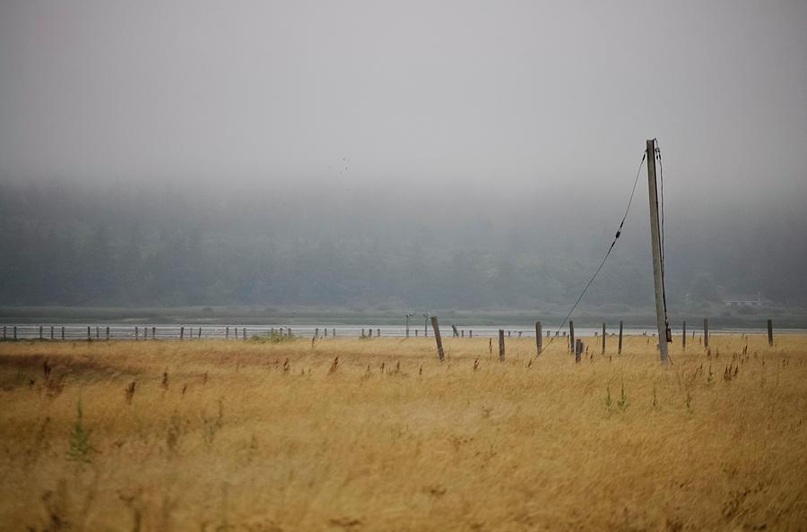 Admiralty Head Photograph - Waitful August Fields by Tom Trimbath