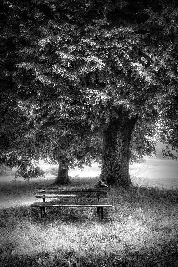 Fall Photograph - Waiting For You In Autumn In Black And White by Debra and Dave Vanderlaan