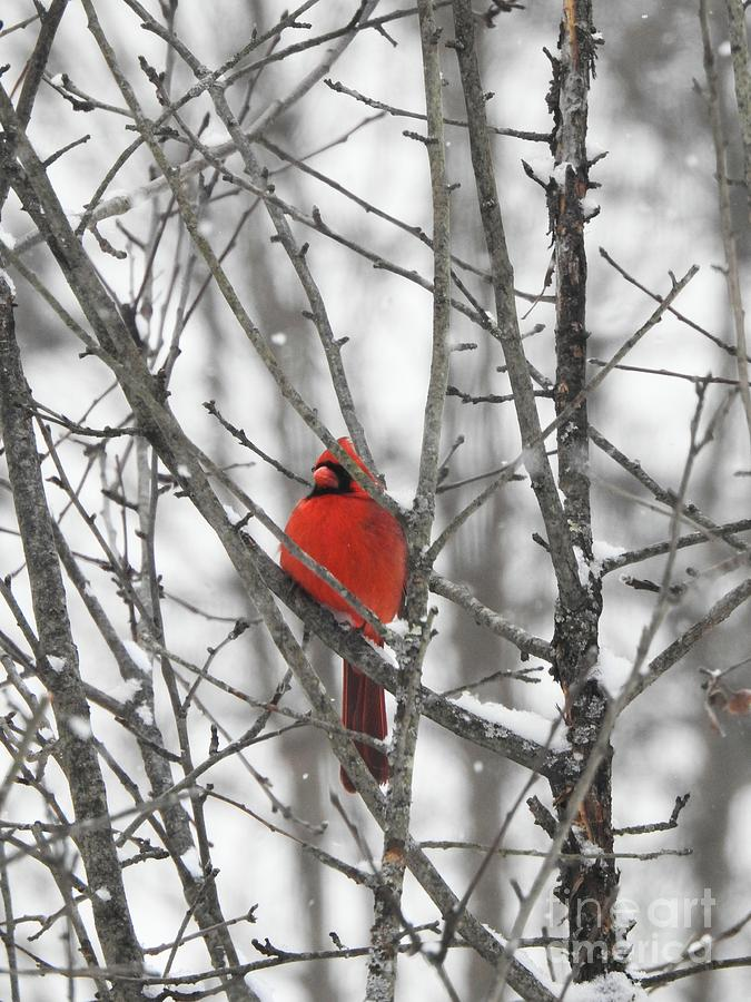 Waiting on Spring by Eunice Miller