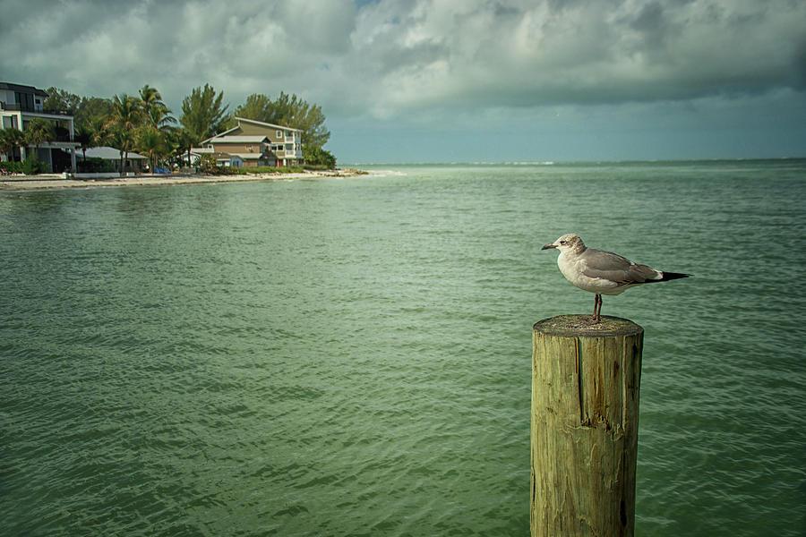 Waiting Seagull by Jolynn Reed