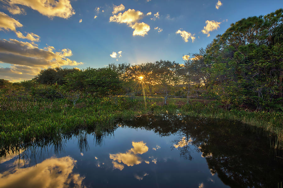 Wakodahatchee Wetlands Sunburst by Juergen Roth