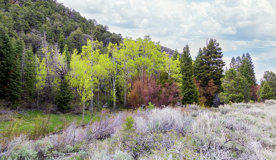 Walk in the Woods by Lisa Malecki