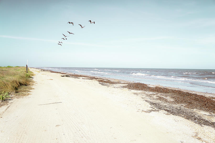 Walking along the ocean by Ellie Teramoto