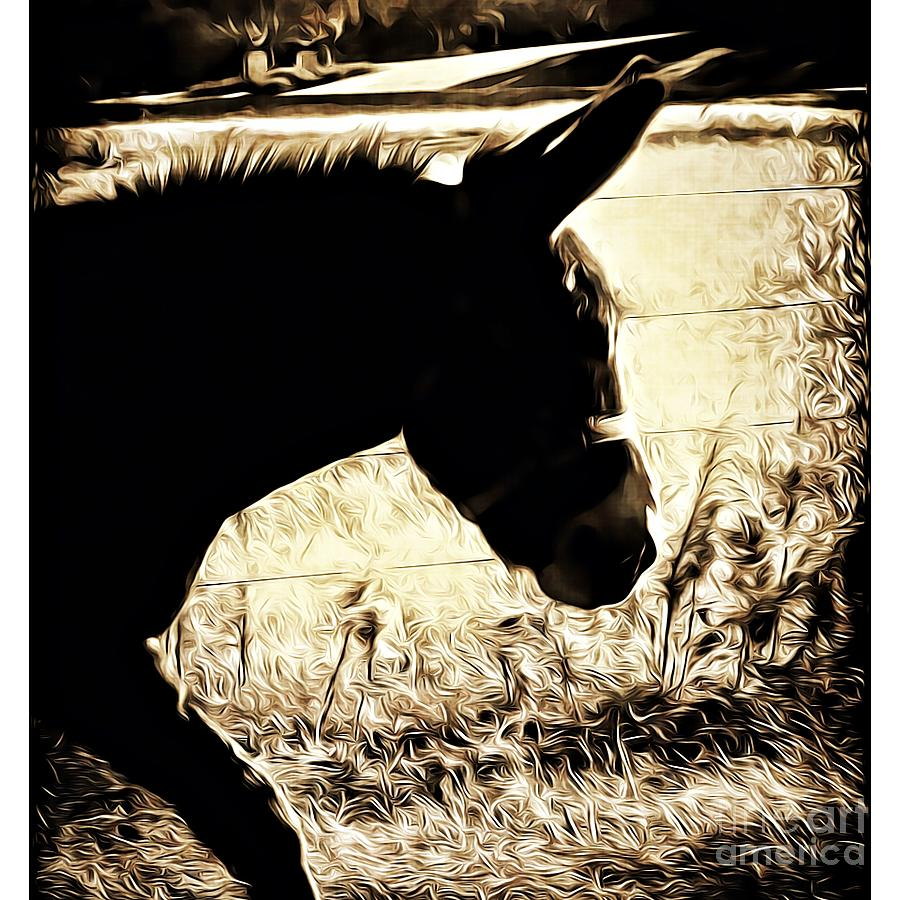 Walking Donkey by Leslie Revels