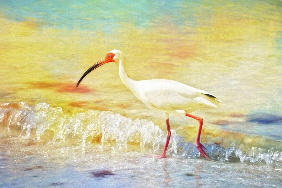 White Ibis Photograph - Walking The Waves Of Sanibel by Alice Gipson