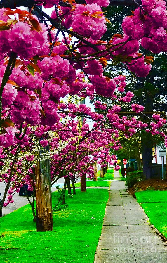 Trees Photograph - Walking Through Blossoms by Suzanne Lorenz