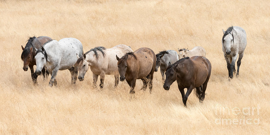 Walking to the Water Hole by Lisa Manifold