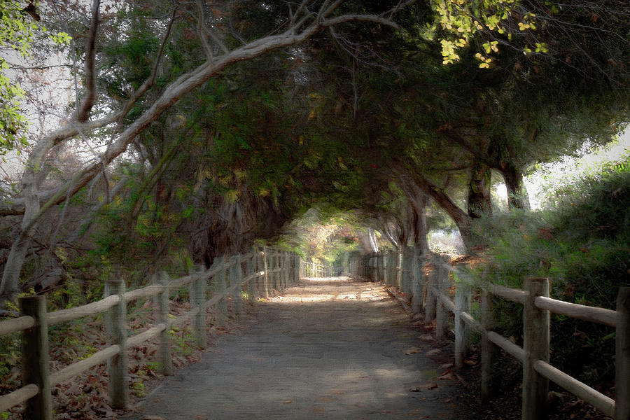 Walking Trail by Alison Frank