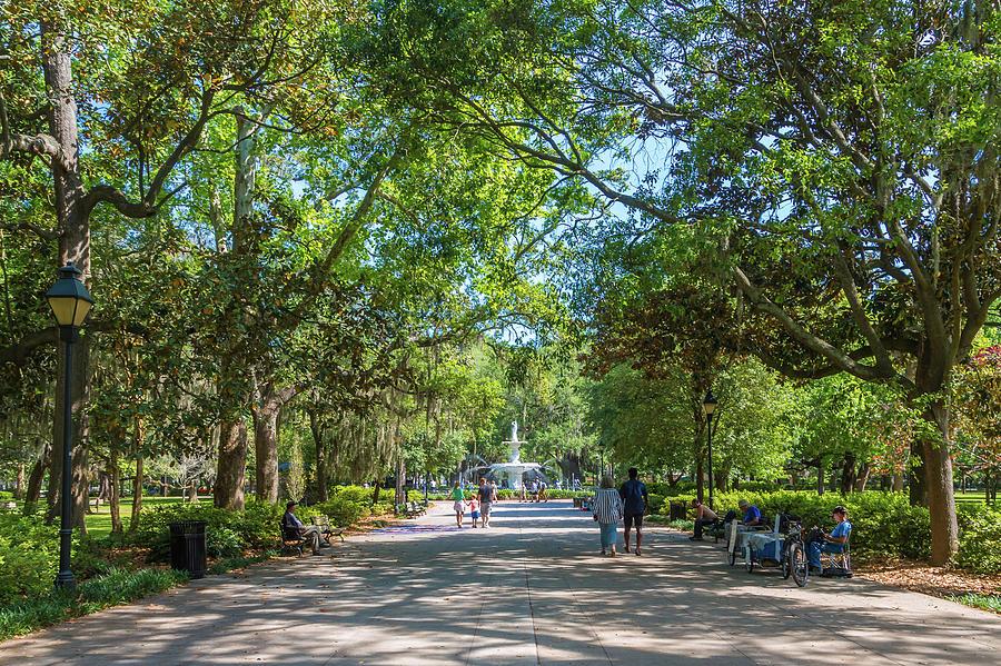Walkway into Forsyth Park by Darryl Brooks