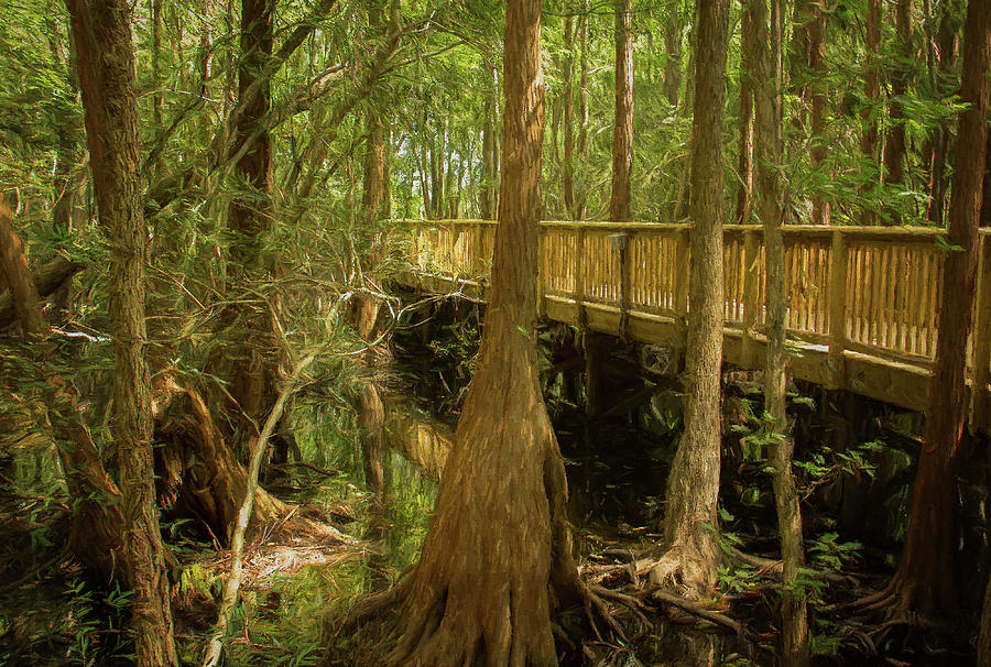 Walkway Through Cypress Swamp by Michelle Tinger