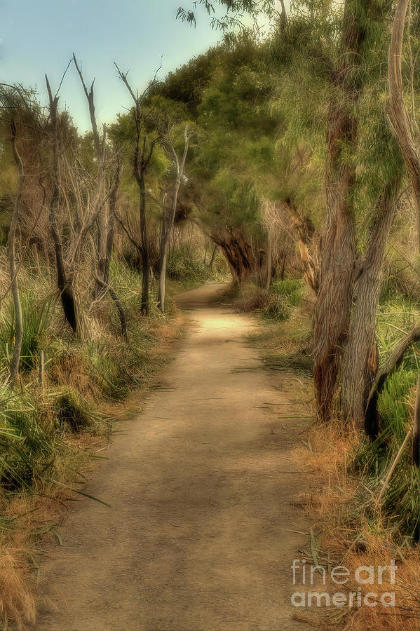 Walkway, Yancehep National Park, Western Australia by Elaine Teague