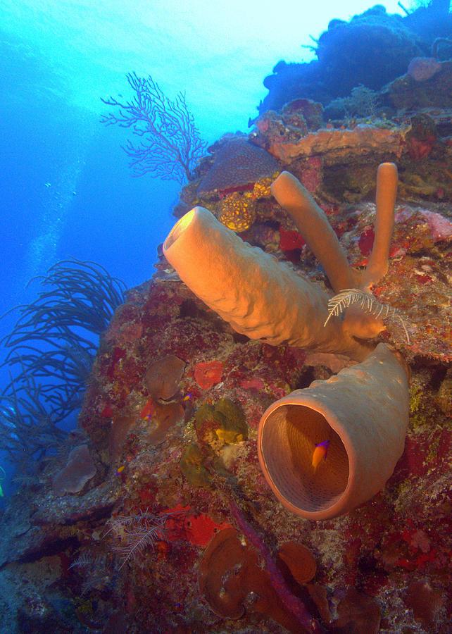 Tube Coral Photograph - Wall Sponge by Todd Hummel
