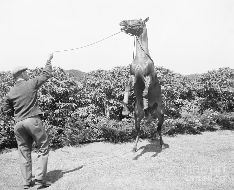 War Admiral With Horse Rearing Photograph by Bettmann