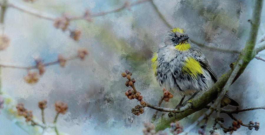 Warbler 2 by Rebecca Cozart
