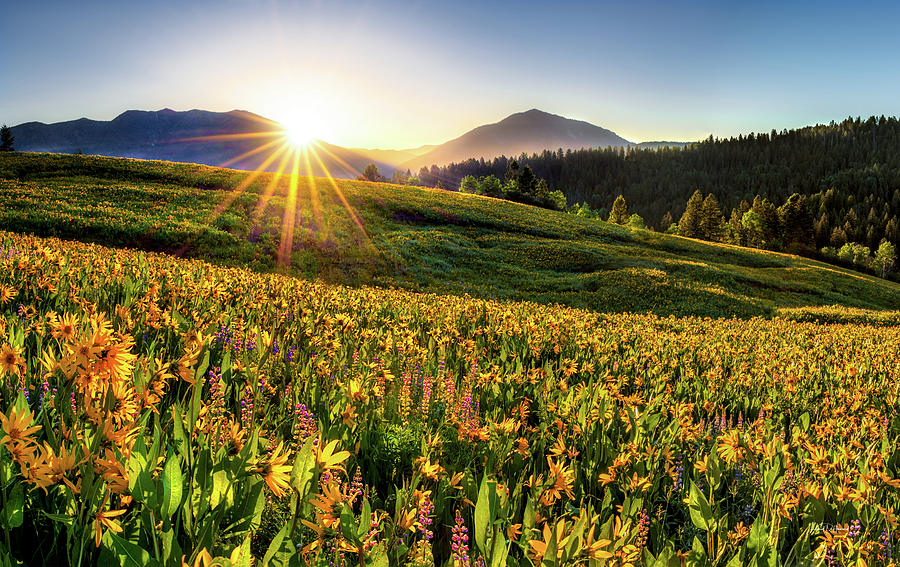 Warm Spring Sunrise 2 by Leland D Howard