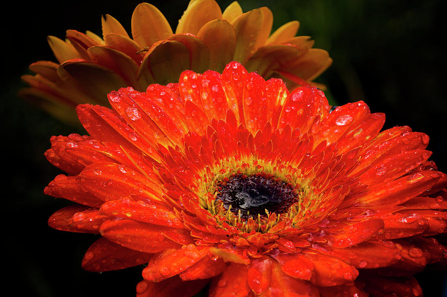 Warm Thoughts Glowing by Susan Callaway