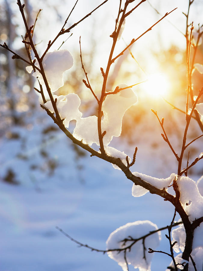 Warm Winter Sun Photograph by Sykkel