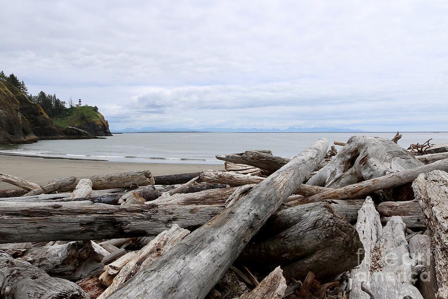 Washington Coastline with Driftwood by Carol Groenen