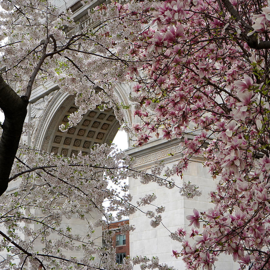 Washington Square Spring by Andrew Fare