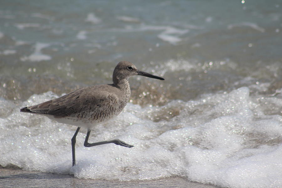Bird Photograph - Wading by Callen Harty