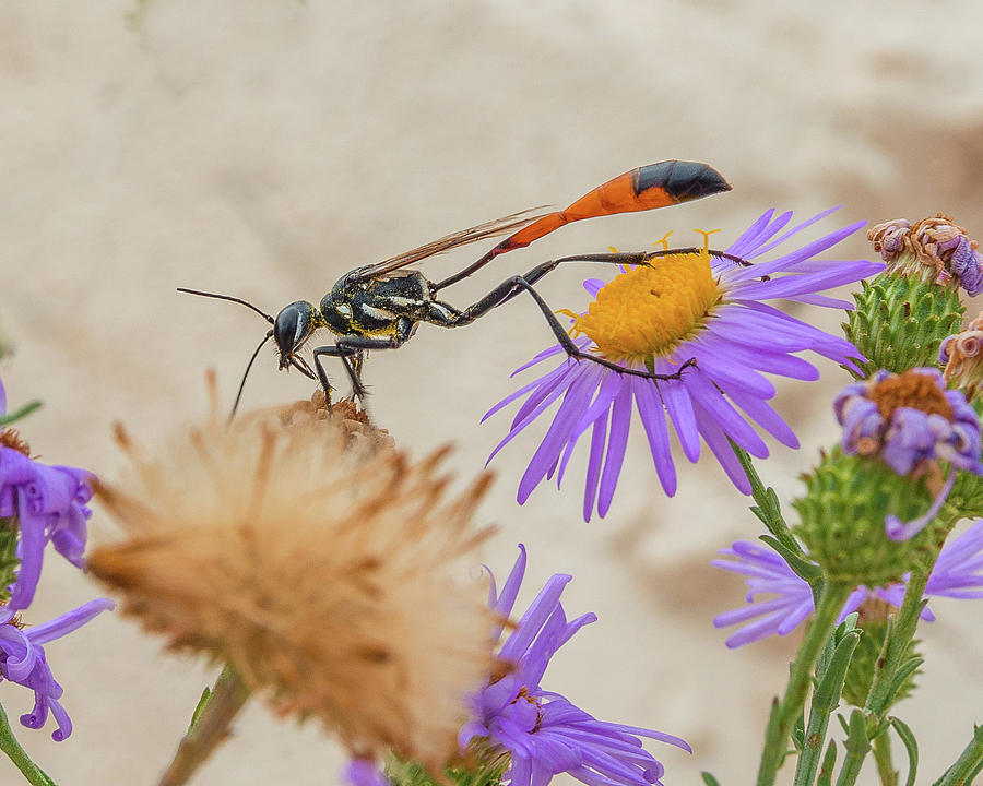 Wasp at White Sands by Adam Reinhart